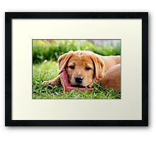 Why there's Adore... Framed Print