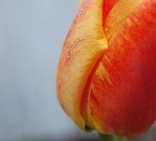 Mango Salsa by Brittany Kinney