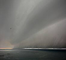 Under the weather with fleeing gull by Paul Davenport