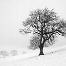 Winter Scene by MartinWilliams