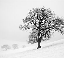 Winter Scene by MartinWilliams