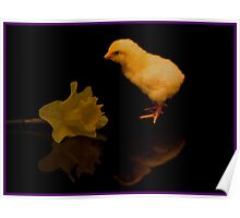 Reflected Easter Chick Poster