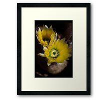 Yellow Cacti Flowers Framed Print