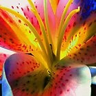 Outlandish Lilly by Glenn Cecero
