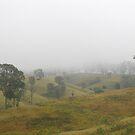 Foggy day by Catherine Davis