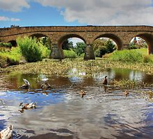 The Oldest Bridge by Emily Taylor