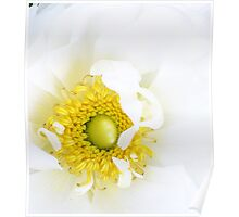 Love in white Poster