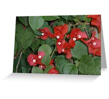 bright red flowers happily dancing together Greeting Card