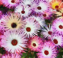 Colourful Dasies by Robbie Goodall