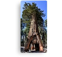 The California Tunnel Tree Canvas Print