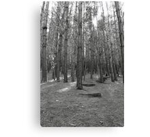 step into the forrest Canvas Print