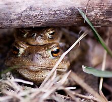 Two toads, one problem. by MiqeMorbid