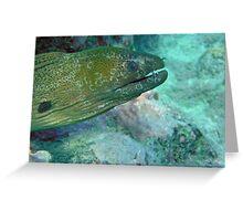 Moray eel Greeting Card