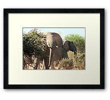 """Uneasy"" - African elephant (Loxodonta africana) Botswana Framed Print"