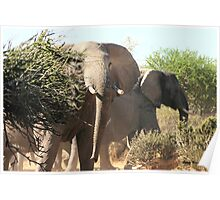 """Uneasy"" - African elephant (Loxodonta africana) Botswana Poster"