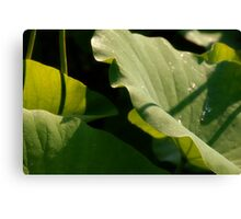 Frondescence Canvas Print