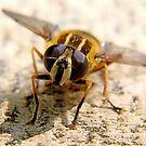 Hoverfly by Dfilmuk Photos