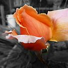 Flash Gorgeous by DEB CAMERON