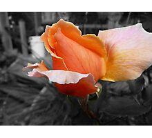 Flash Gorgeous Photographic Print