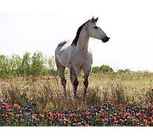 Field of Flowers In Texas Photographic Print