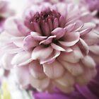 Fleur by margosnyderart