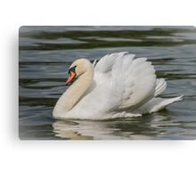 Mute Swan with Wings Raised Gracefully Sailing Along Canvas Print