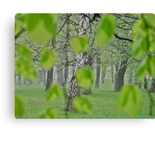 Views: 2369 . My Green Day . by Brown Sugar . Featured * . This image Has Been S O L D .  .WoW !!! .   How wonderful !!! thank you !!! Happy Easter Friends !!! Canvas Print