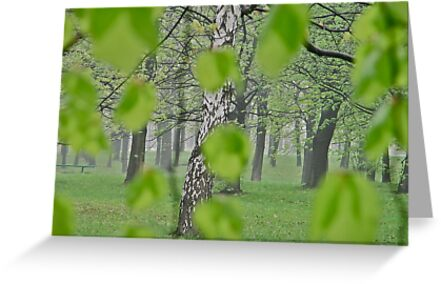 Views: 2369 . My Green Day . by Brown Sugar . Featured * . This image Has Been S O L D .  .WoW !!! .   How wonderful !!! thank you !!! Happy Easter Friends !!! by © Andrzej Goszcz,M.D. Ph.D