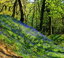 Bluebell Hill ~ Blackbury Camp by Susie Peek