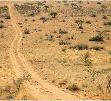 """Tracks in the wilderness"" - Tswalu desert reserve - Kalahari - SA by Sandy Beaton"
