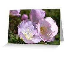 Wildflower ~Pink  Primrose Greeting Card