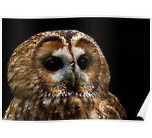 Troy the Tawny Owl Poster