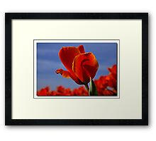 A tulip for a special friend Framed Print