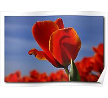 A tulip for a special friend Poster