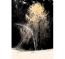 Weight of Winter Photographic Print