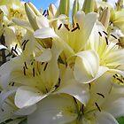 yellow lilies by Oil Water Artt