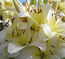 yellow lilies by Oil Water Artt