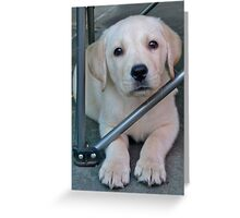 """""""Buster"""" Greeting Card"""