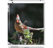 Female northern cardinal perched on a branch iPad Case/Skin