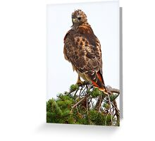 Red Tailed Greeting Card