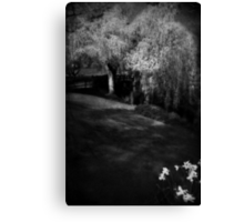 The soul of the Willow tree Canvas Print