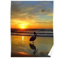 Pelican at Sunrise, Manly Beach, Sydney, NSW, Australia Poster