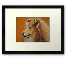 Rough Collie  Framed Print