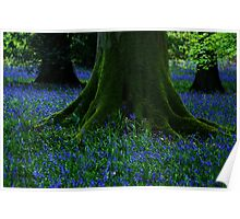 Tree Among the Bluebells Poster