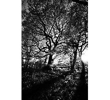 Nature light and patterns Photographic Print