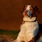 The Brittany Sphinx Impersonation by Helen Green
