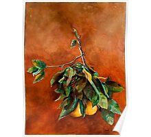 Branch of Grapefruit Poster