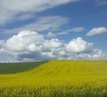 Yellow Fields by Rene  Eveland