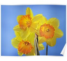 Trumpeting Spring Poster