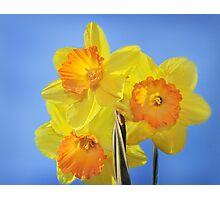 Trumpeting Spring Photographic Print
